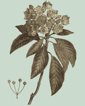 Flowering Trees V by Vision Studio