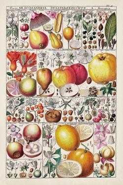 Fruit Chart by Vision Studio