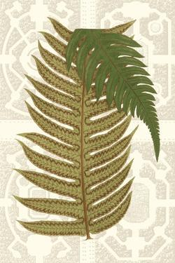 Garden Ferns II by Vision Studio