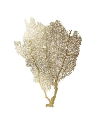 Gold Foil Sea Fan I by Vision Studio