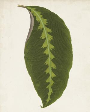 Graphic Leaf I by Vision Studio