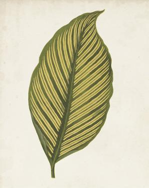 Graphic Leaf II by Vision Studio