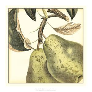 Graphic Pear by Vision Studio