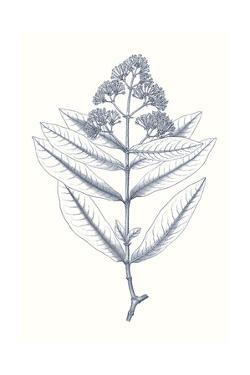 Indigo Botany Study I by Vision Studio