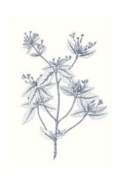Indigo Botany Study III by Vision Studio