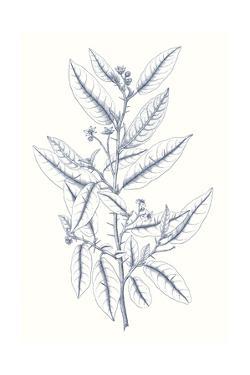 Indigo Botany Study V by Vision Studio