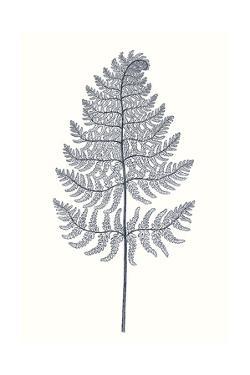Indigo Botany Study VIII by Vision Studio