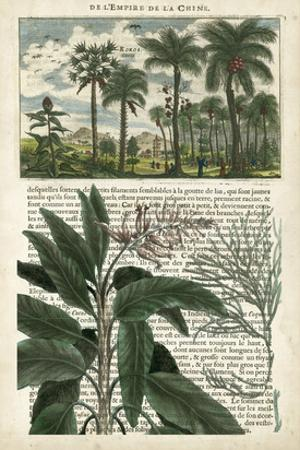 Journal of the Tropics I by Vision Studio