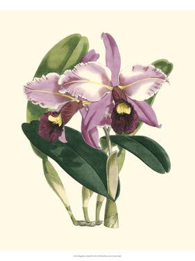 Magnificent Orchid III by Vision Studio