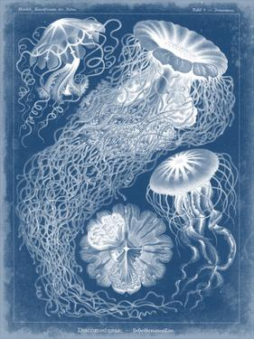 Marine Blueprint II by Vision Studio