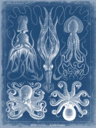 Marine Blueprint V by Vision Studio