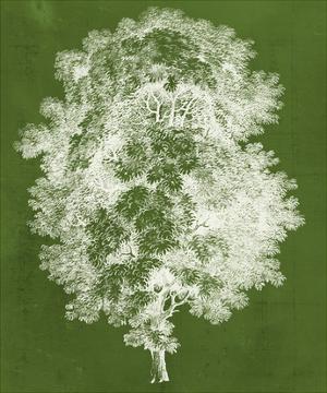 Modern Arbor IV by Vision Studio