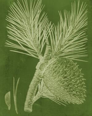 Modern Pine III by Vision Studio