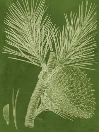 Modern Pine III