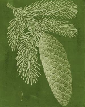 Modern Pine IV by Vision Studio