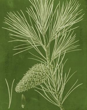 Modern Pine V by Vision Studio
