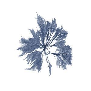 Navy Seaweed I by Vision Studio