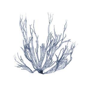 Navy Seaweed IV by Vision Studio