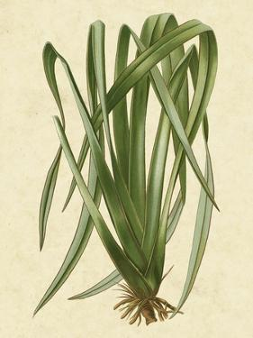 New Zealand Flax by Vision Studio
