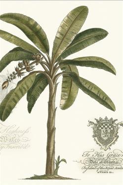 Non-embellished Palm Fresco I by Vision Studio
