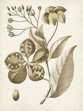 Ochre Botanical II by Vision Studio