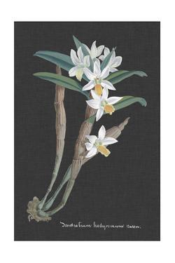 Orchid on Slate I by Vision Studio