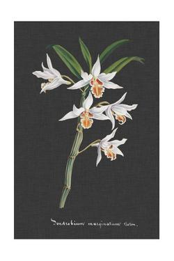 Orchid on Slate IV by Vision Studio