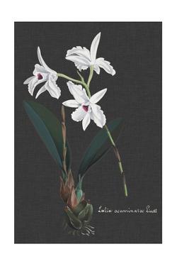 Orchid on Slate V by Vision Studio