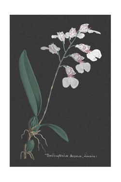 Orchid on Slate VI by Vision Studio
