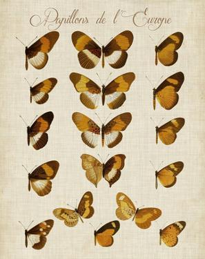 Papillons de L'Europe I by Vision Studio