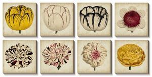 Pop Florals by Vision Studio