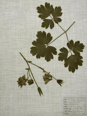 Pressed Leaves on Linen I by Vision Studio
