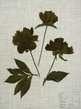 Pressed Leaves on Linen II by Vision Studio