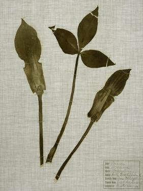 Pressed Leaves on Linen IV by Vision Studio
