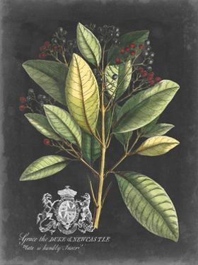 Royal Foliage IV by Vision Studio