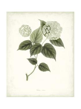 Sage Botanical I by Vision Studio