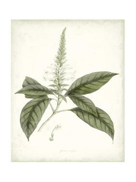 Sage Botanical II by Vision Studio