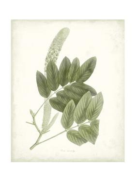 Sage Botanical IV by Vision Studio