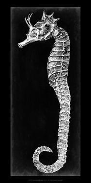 Seahorse Blueprint I by Vision Studio