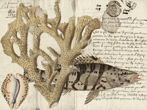Sealife Journal II by Vision Studio