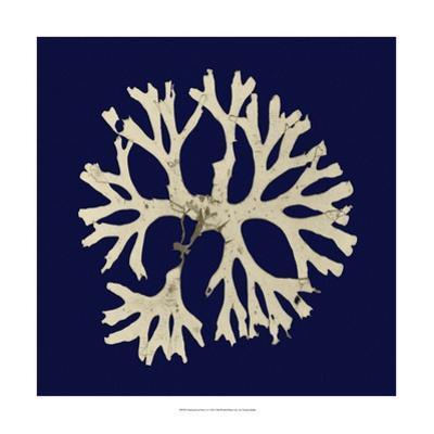 Seaweed on Navy I by Vision Studio