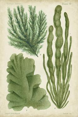 Seaweed Specimen in Green I by Vision Studio