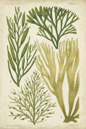Seaweed Specimen in Green III
