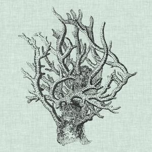 Serene Coral II by Vision Studio