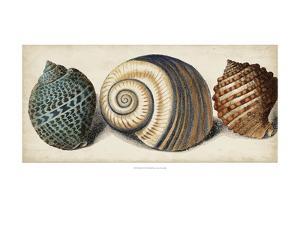 Shell Trio I by Vision Studio