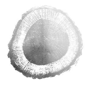 Silver Foil Tree Ring II by Vision Studio