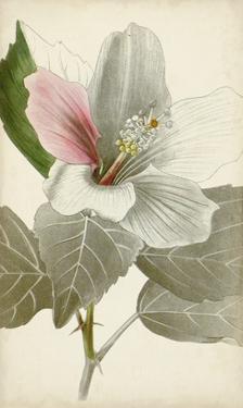 Silvery Botanicals VI by Vision Studio