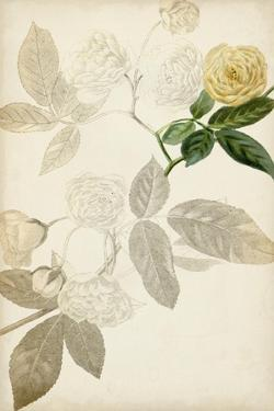 Silvery Botanicals XII by Vision Studio