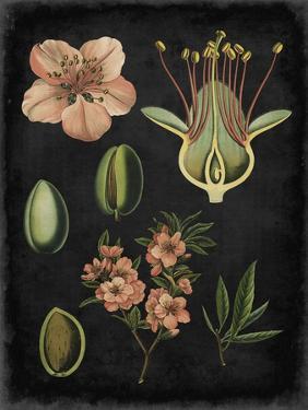 Study in Botany I by Vision Studio