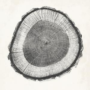 Tree Ring II by Vision Studio